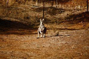 Auton vuokraus Tamworth, Australia