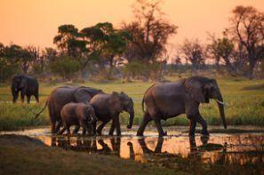 Autonvuokraus Botswana