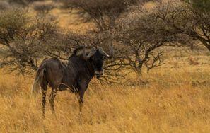 Auton vuokraus Mahikeng, Etelä-Afrikka