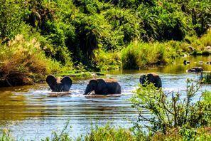 Auton vuokraus Phalaborwa, Etelä-Afrikka