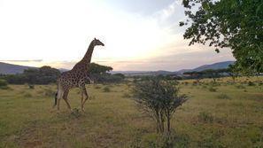 Auton vuokraus Rustenburg, Etelä-Afrikka