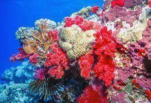 Auton vuokraus Coral Coast, Fiji